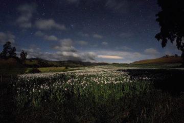 مهتاب در دشت